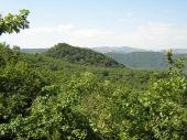 foresta-balcone-